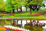 Button to see details and booking options for Keukenhof & Delft